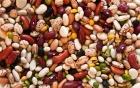 蛇豆的营养价值_吃蛇豆的好处