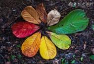 秋天能栽石榴吗