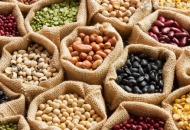 蛋白质有什么作用