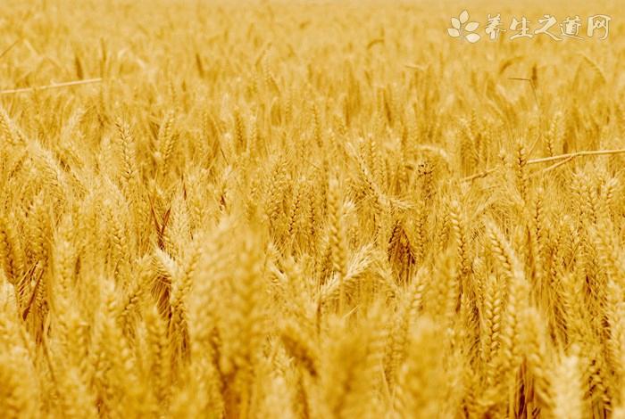 杂豆小麦粥的营养价值