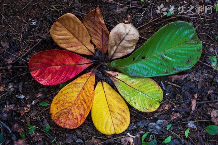 秋季皮肤为什么容易缺水