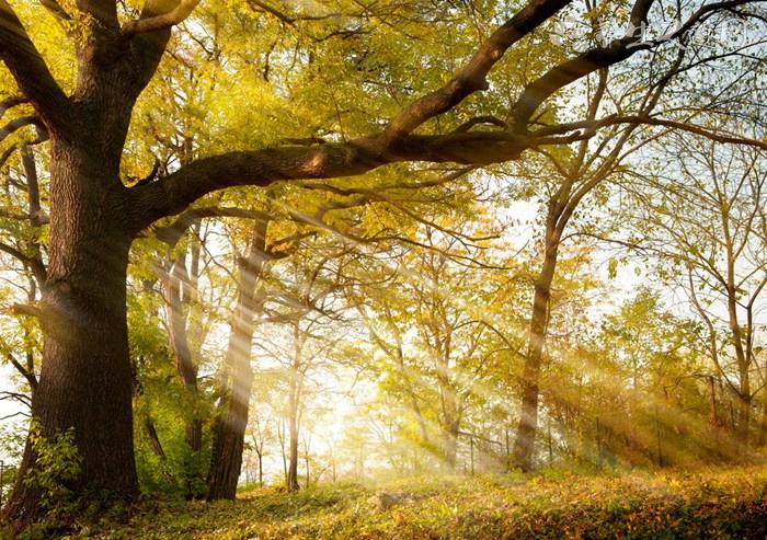 秋季如何滋阴润肺