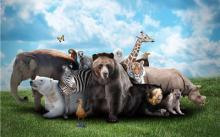 ?;さ厍?,请不要伤害野生动物