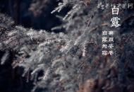 白露节气养生-收获秋季的美食
