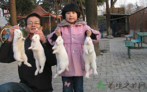 冬天如何抓兔子好
