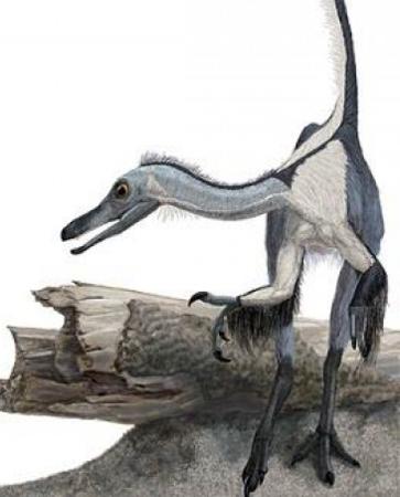 中美发现最古老恐龙化石 提前鸟类祖先出现时间