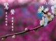 春暖花开 香气为伴寻花花世界