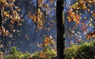 树叶为什么在秋季落下?你不知道的冷知识!