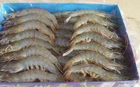 吃海鲜要注意了,海鲜不能和这些东西一起吃