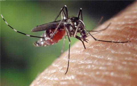 气温回升蚊子出没,小心登革热!