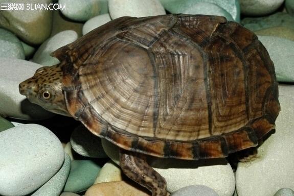 乌龟什么时候冬眠