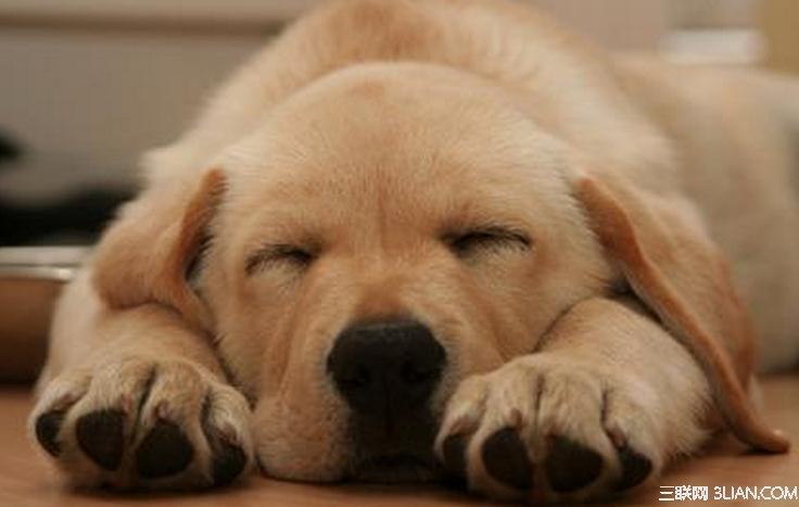 狗狗睡觉有什么习惯