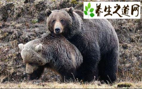 世界上最强壮的动物之一-灰熊