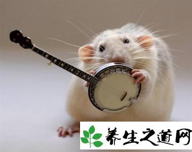 世界上最可爱的老鼠图片大全